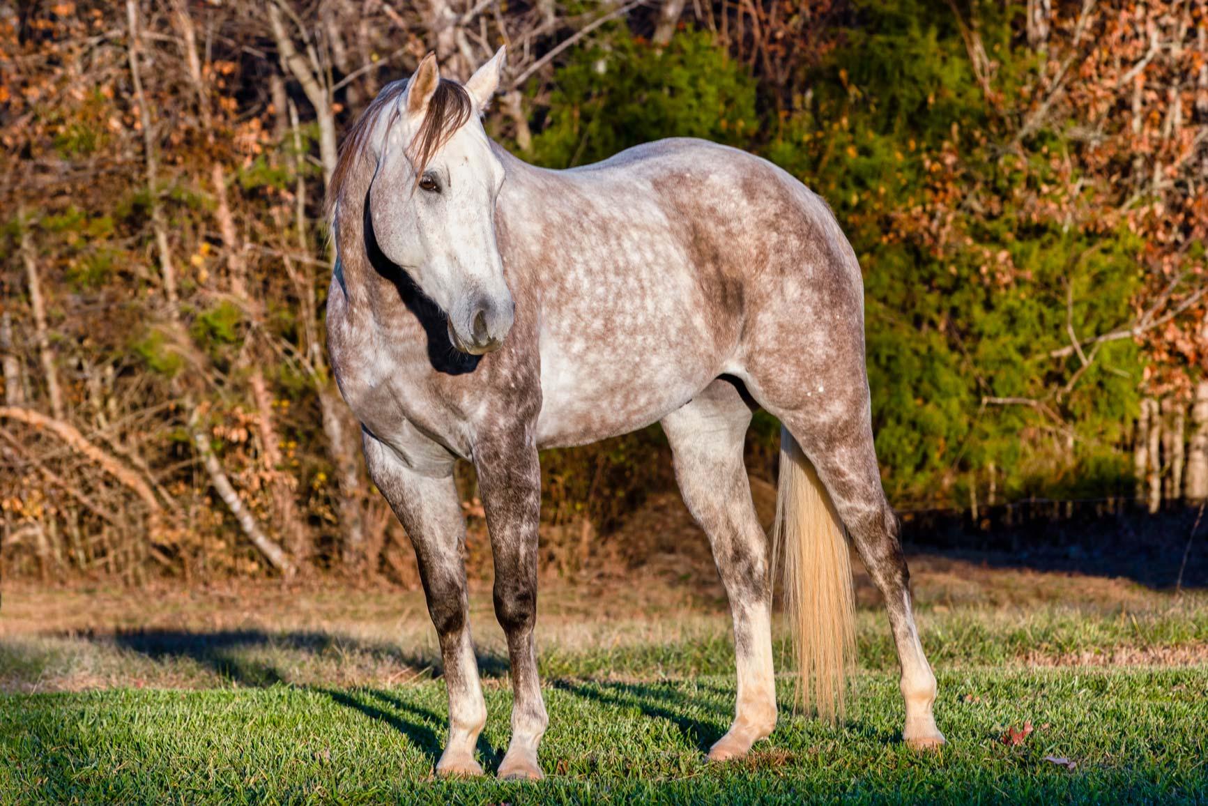 Rawhide-Ranch-Traveler_59I6986