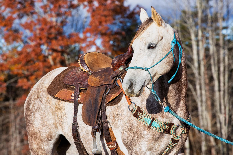 Rawhide-Ranch-Traveler_64A8084