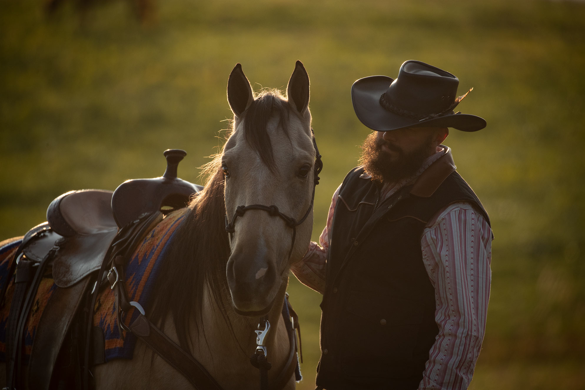 002-Dodge-Luxury-Trail-Horse-For-Sale