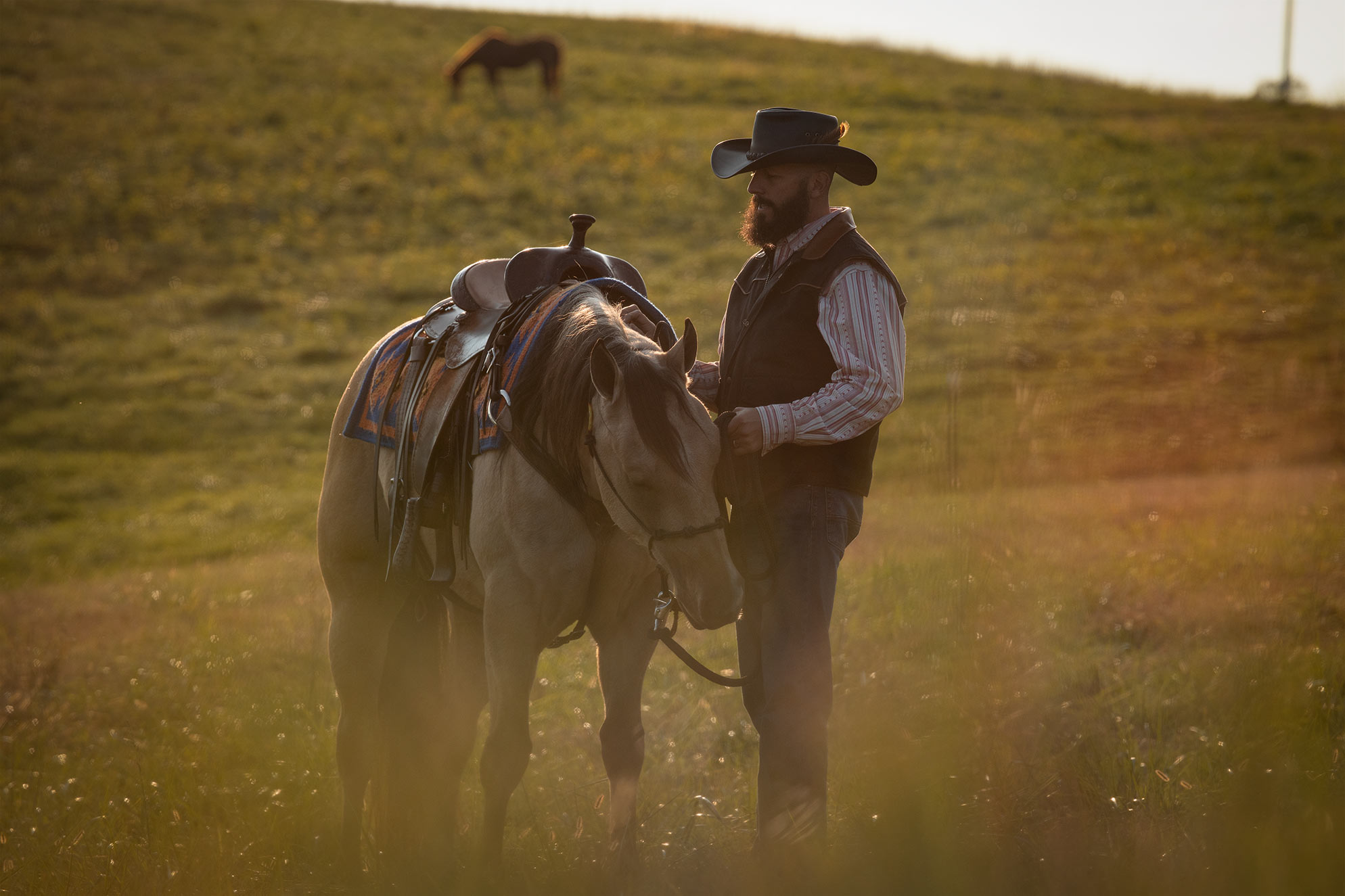 003-Dodge-Luxury-Trail-Horse-For-Sale