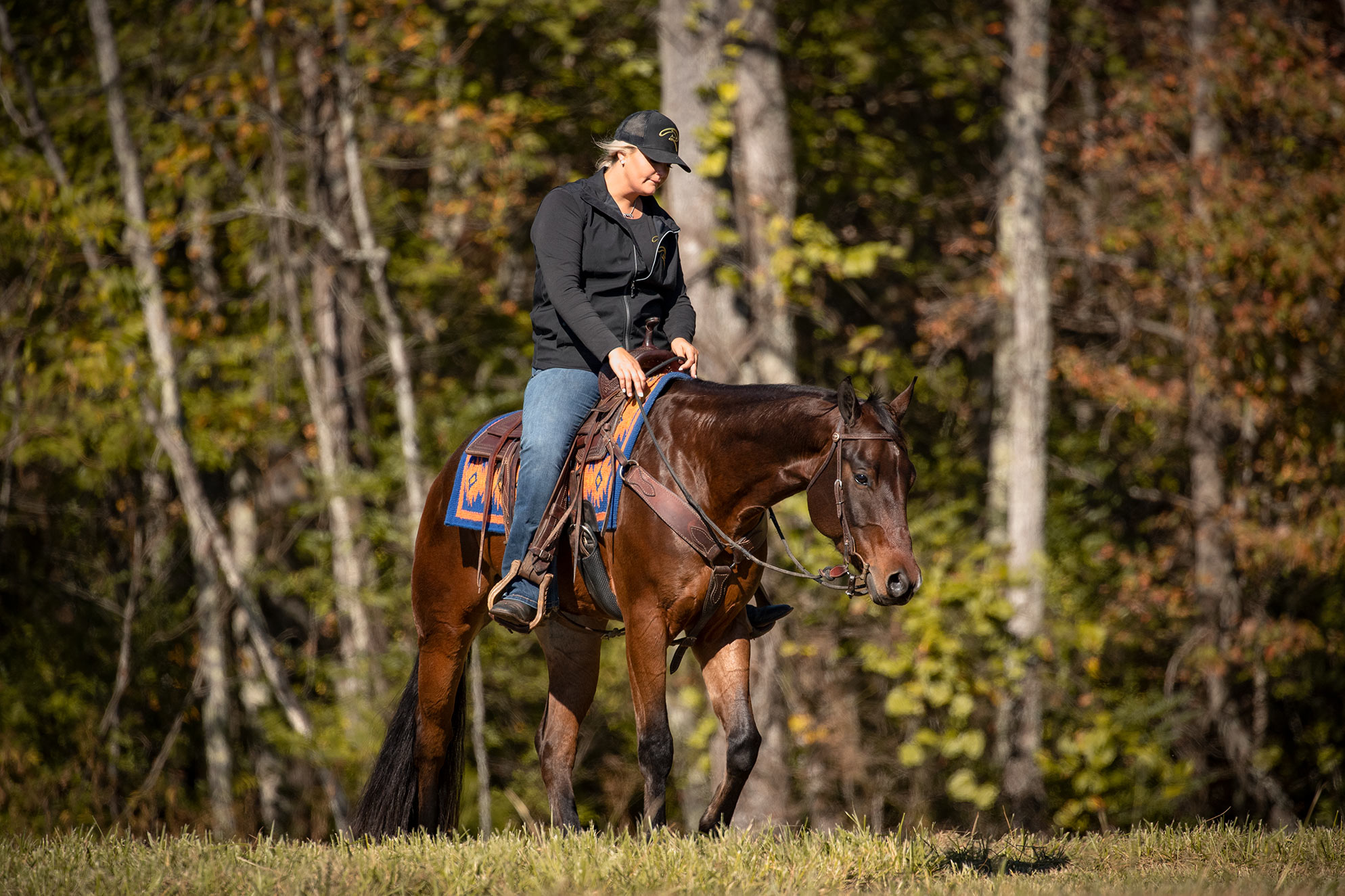 007-Ace-Luxury-Trail-Horse-For-Sale