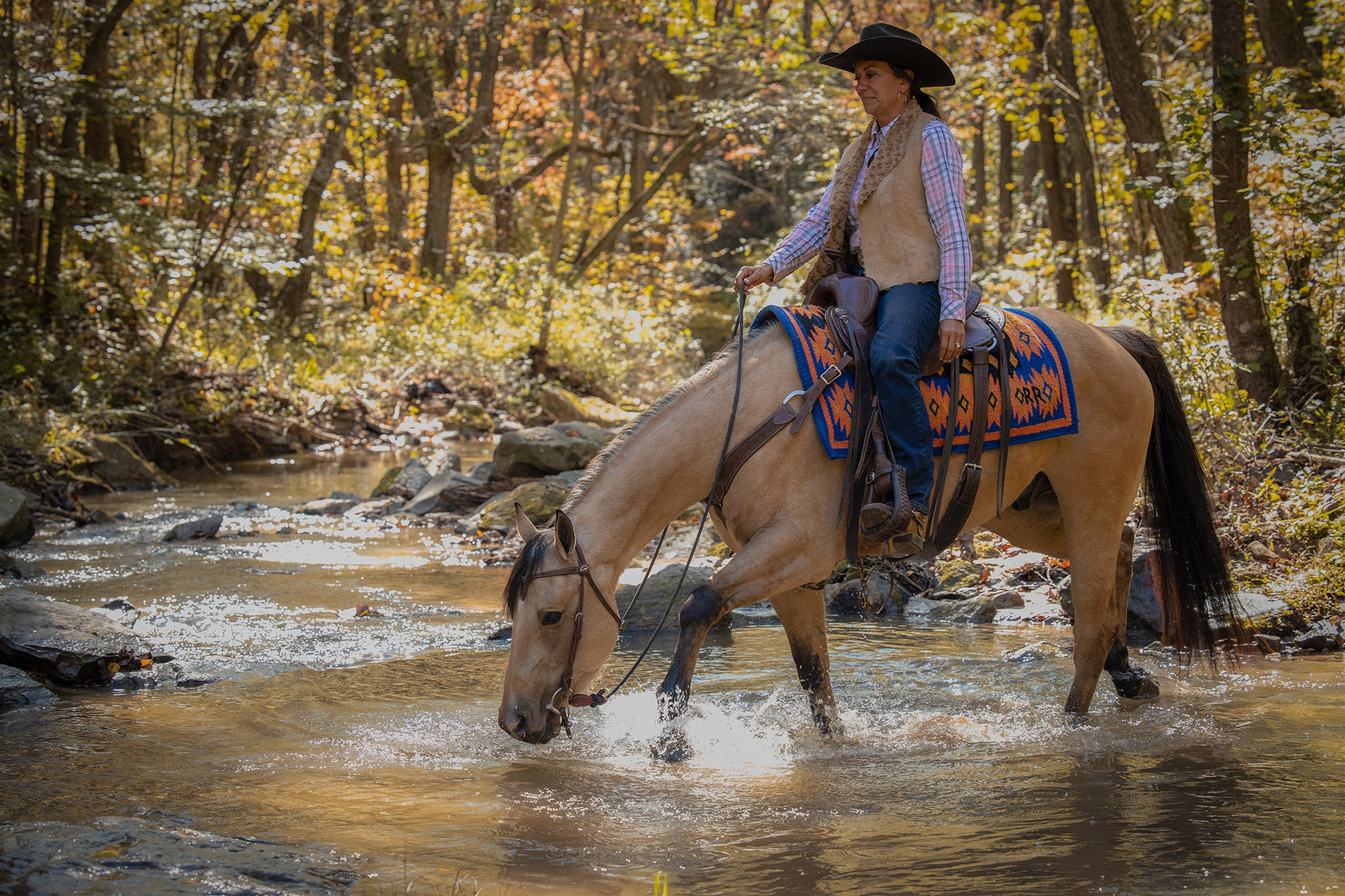 008-Dodge-Luxury-Trail-Horse-For-Sale