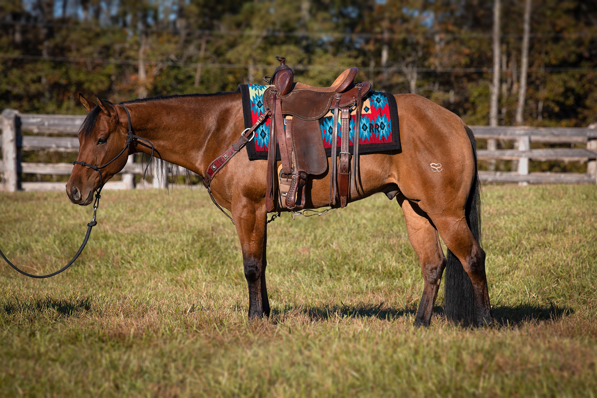 008-Ranger-Luxury-Trail-Horse-For-Sale
