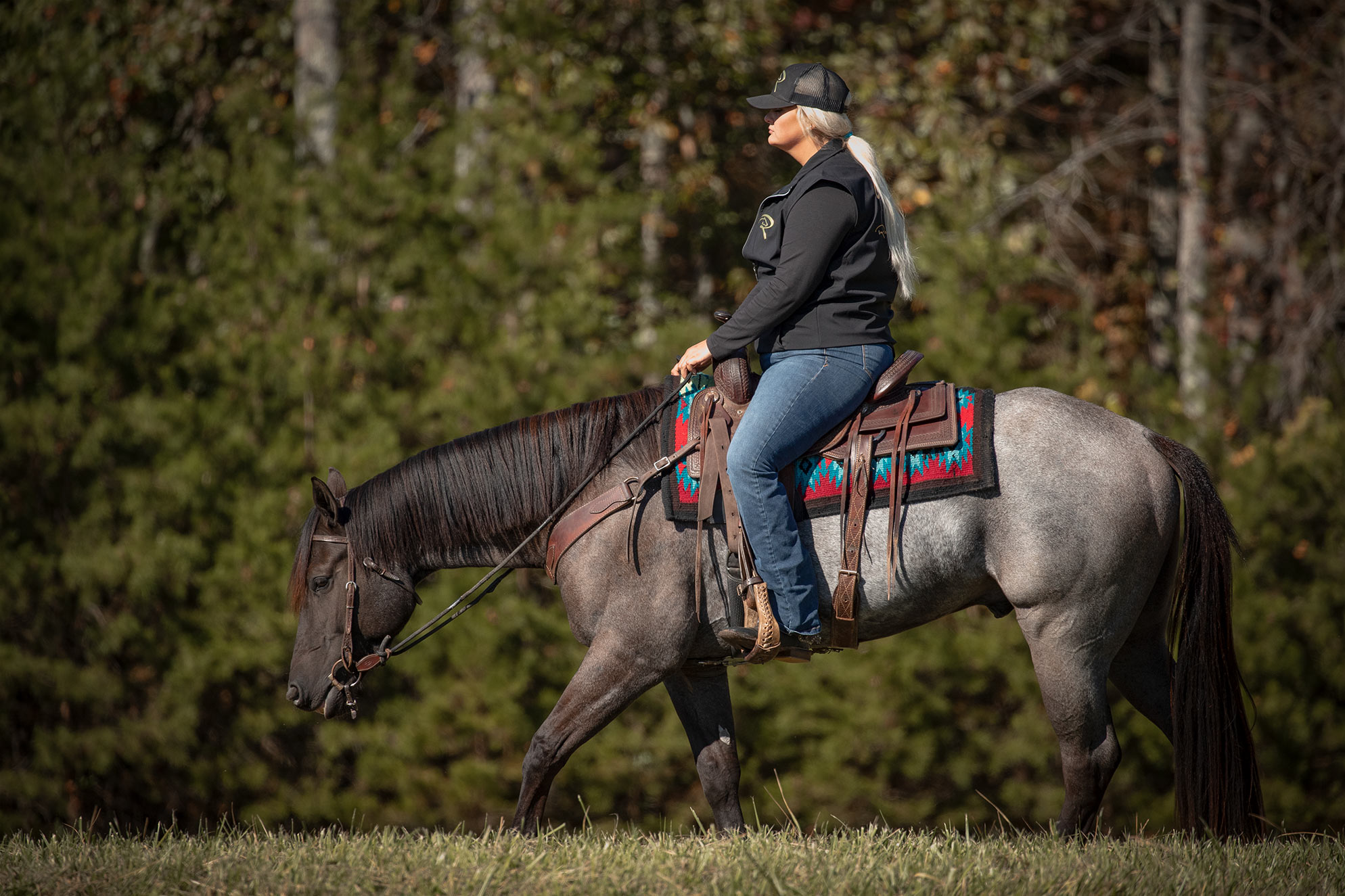 010-Gunsmoke-Luxury-Trail-Horse-For-Sale