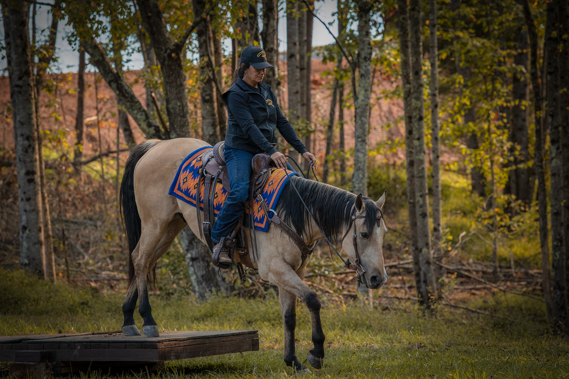 011-Dodge-Luxury-Trail-Horse-For-Sale