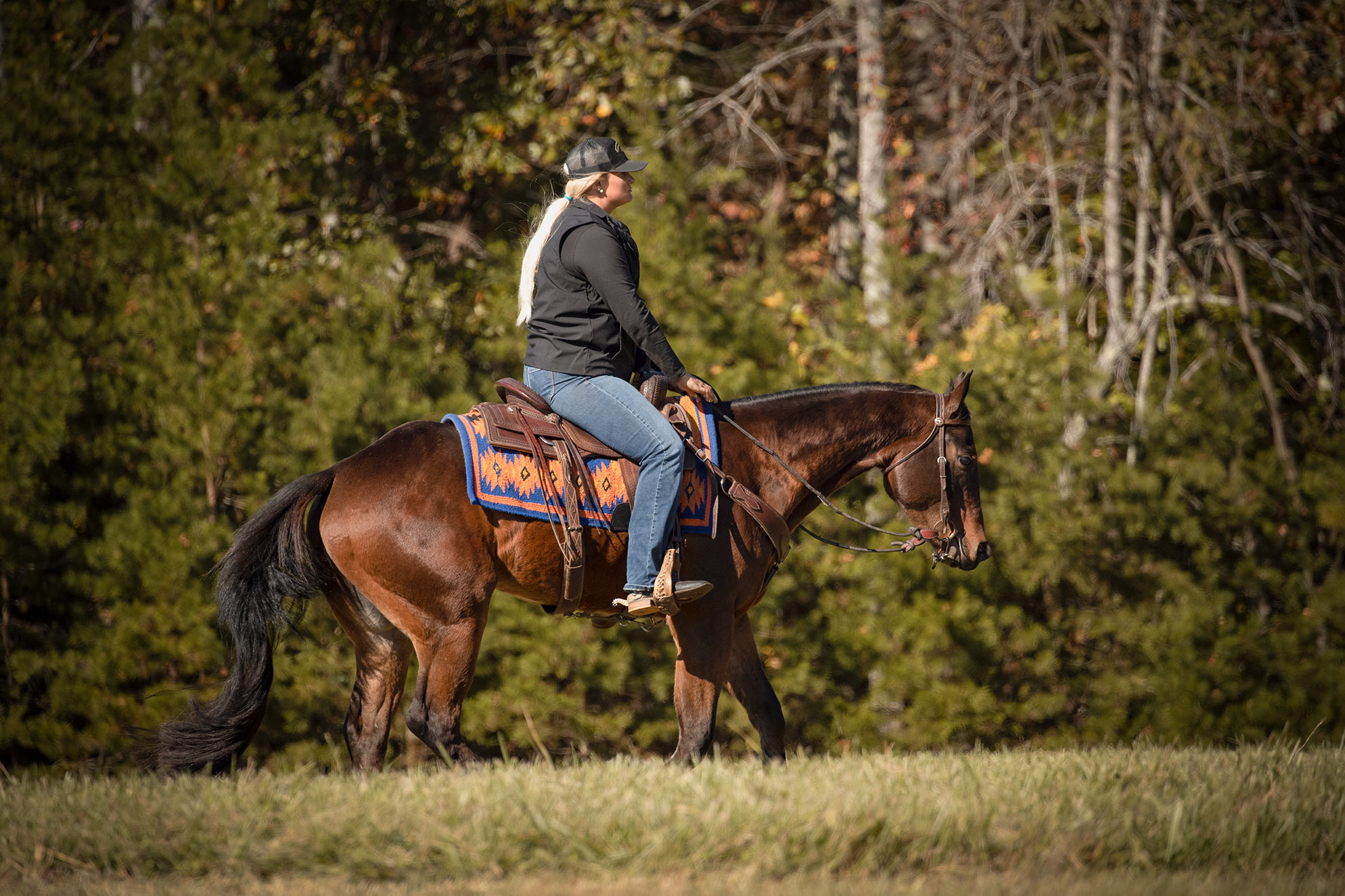 012-Ace-Luxury-Trail-Horse-For-Sale