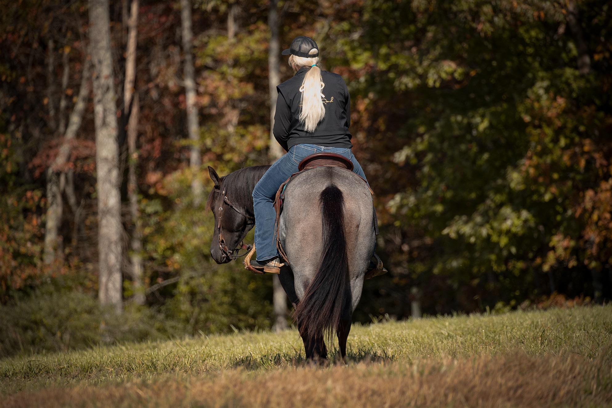012-Gunsmoke-Luxury-Trail-Horse-For-Sale