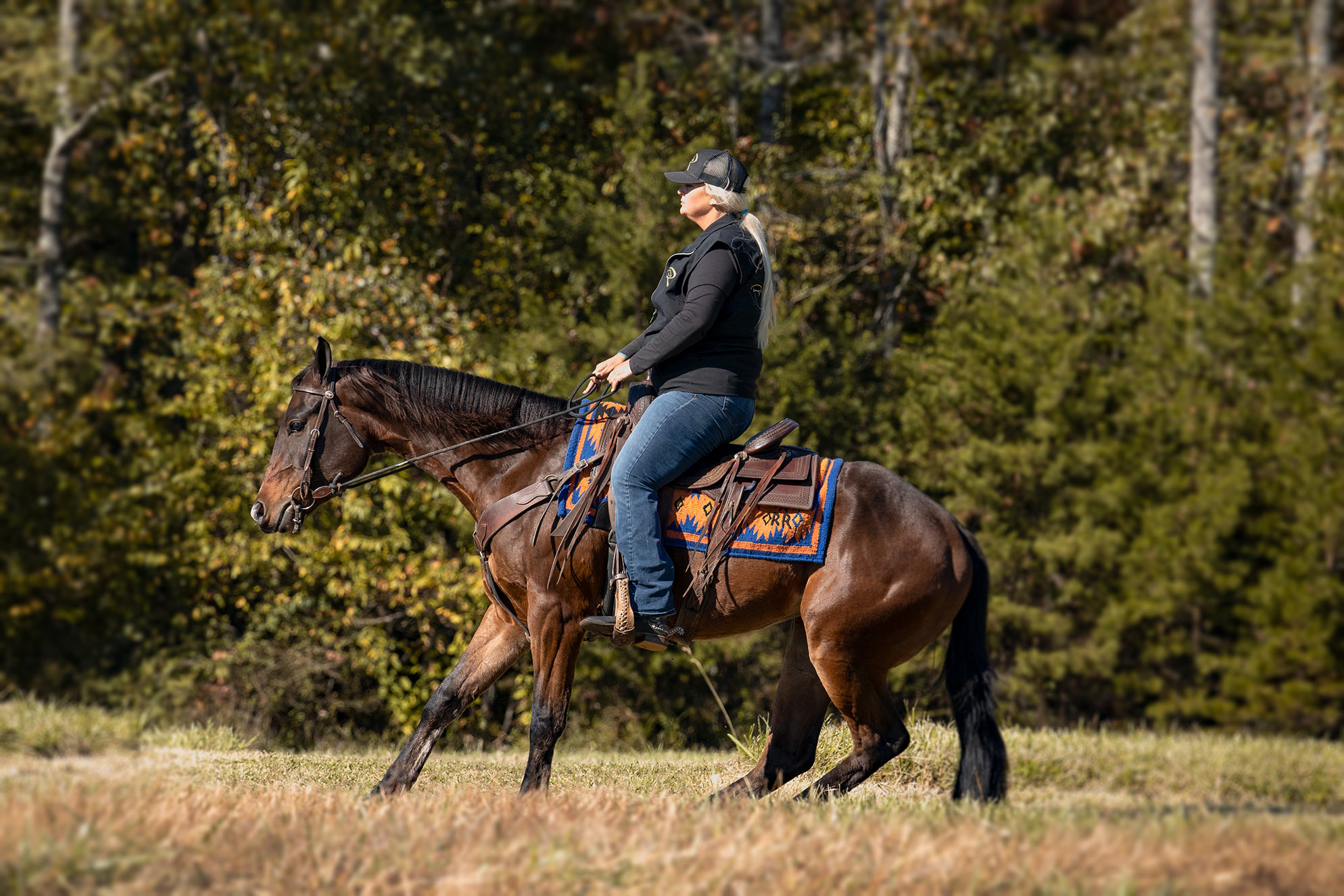 014-Ace-Luxury-Trail-Horse-For-Sale