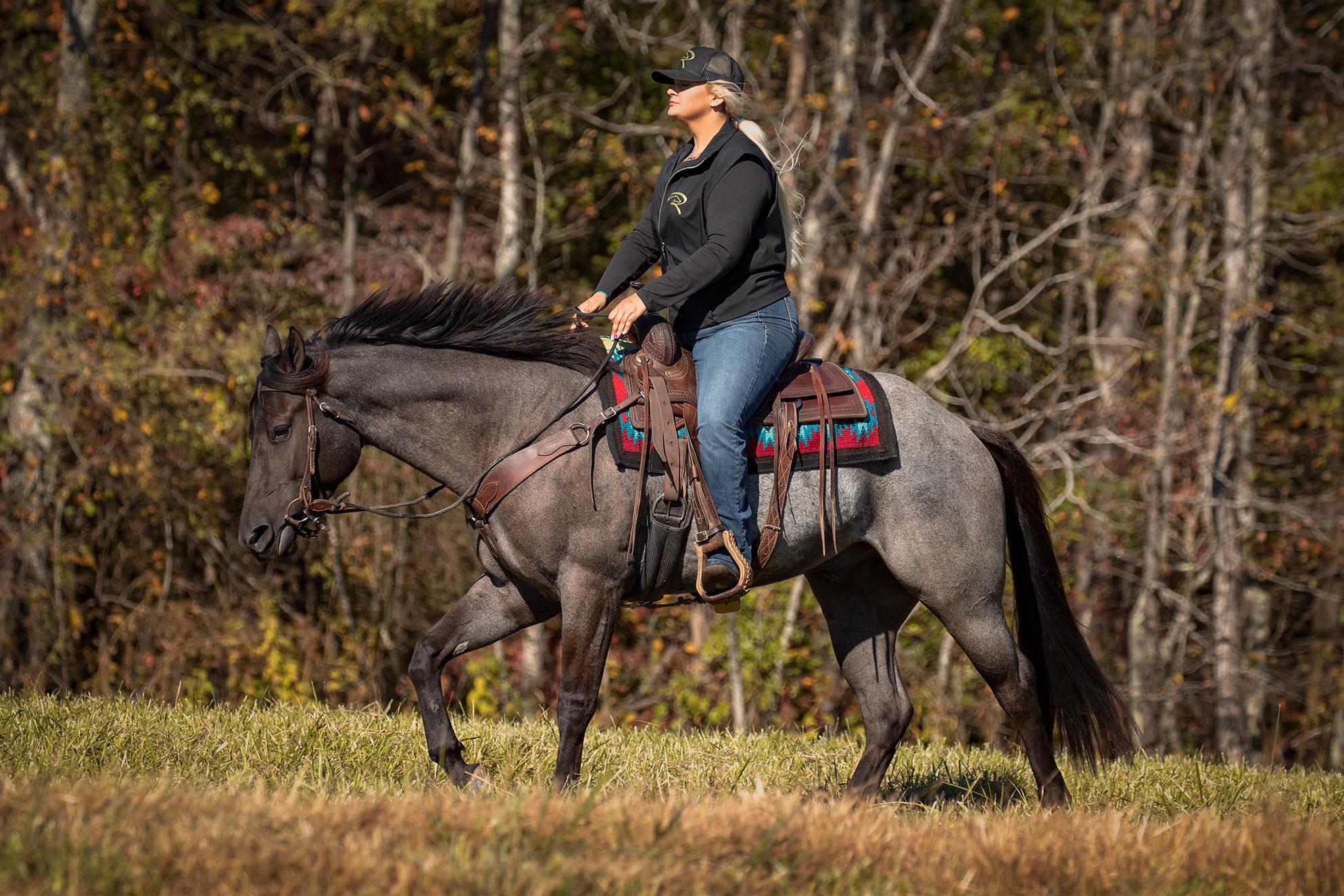 016-Gunsmoke-Luxury-Trail-Horse-For-Sale