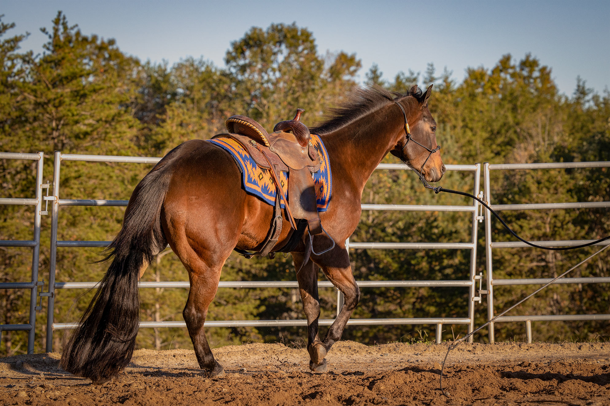 017-Ace-Luxury-Trail-Horse-For-Sale