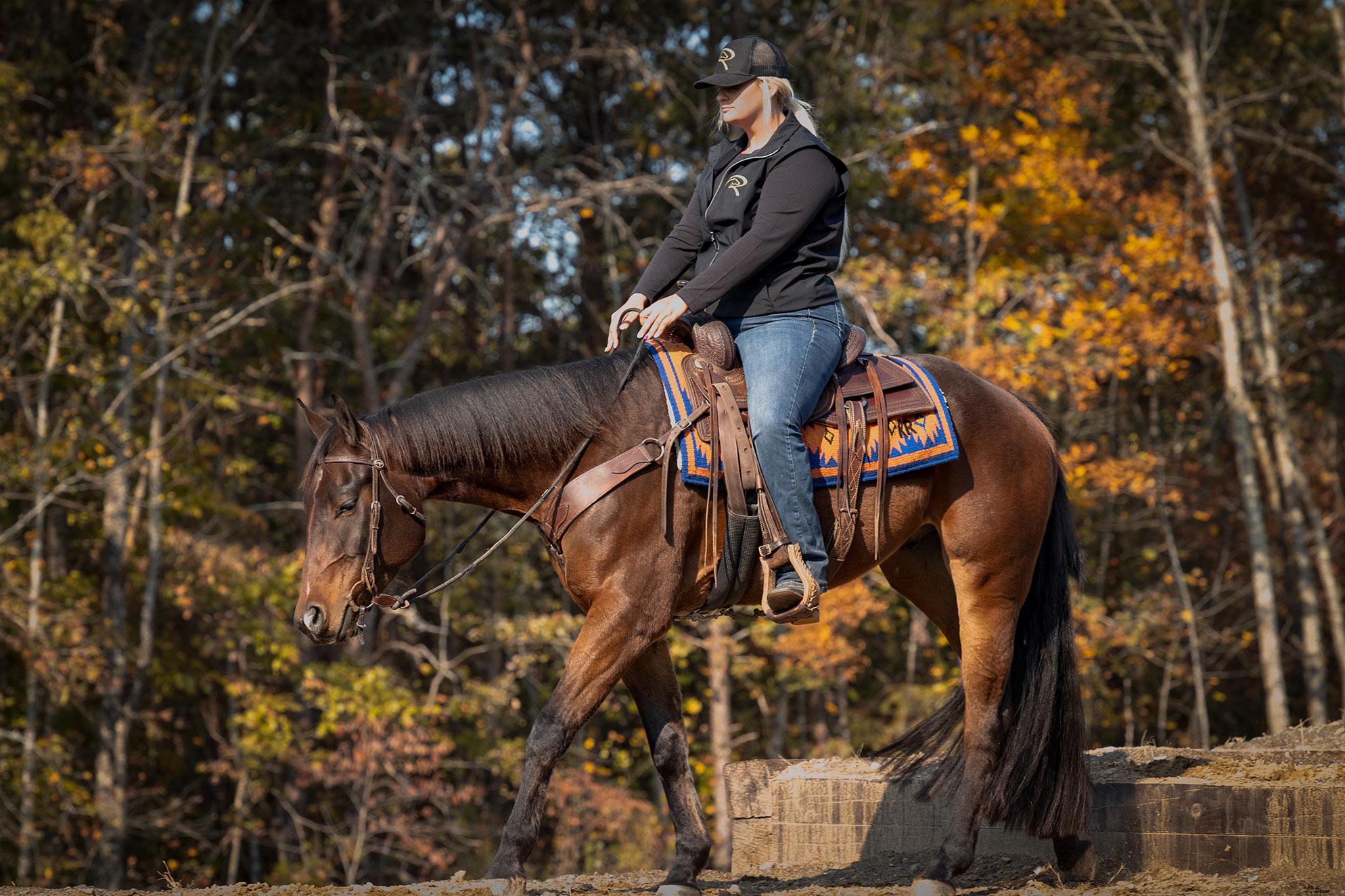 018-Ace-Luxury-Trail-Horse-For-Sale