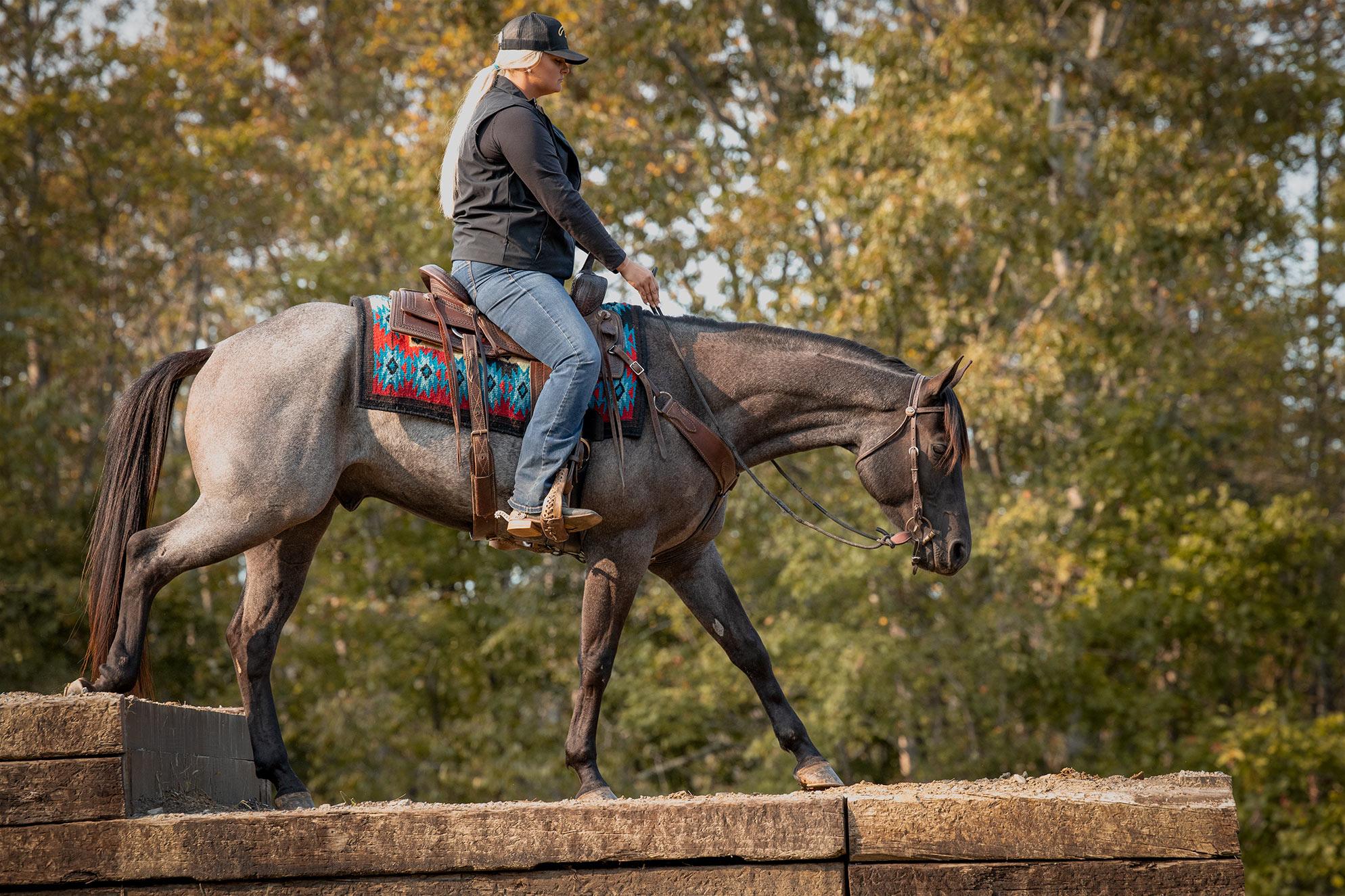 018-Gunsmoke-Luxury-Trail-Horse-For-Sale