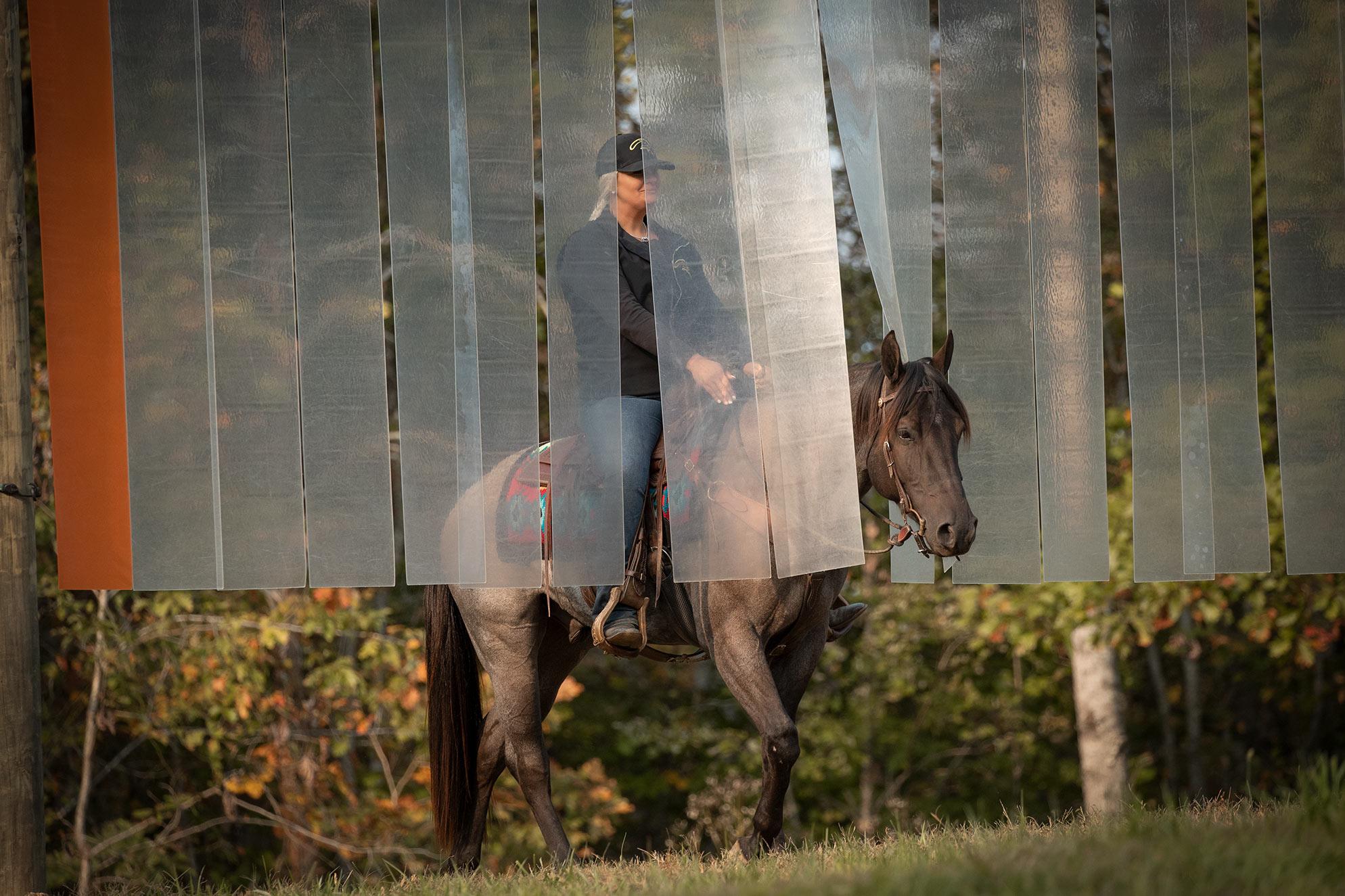 019-Gunsmoke-Luxury-Trail-Horse-For-Sale