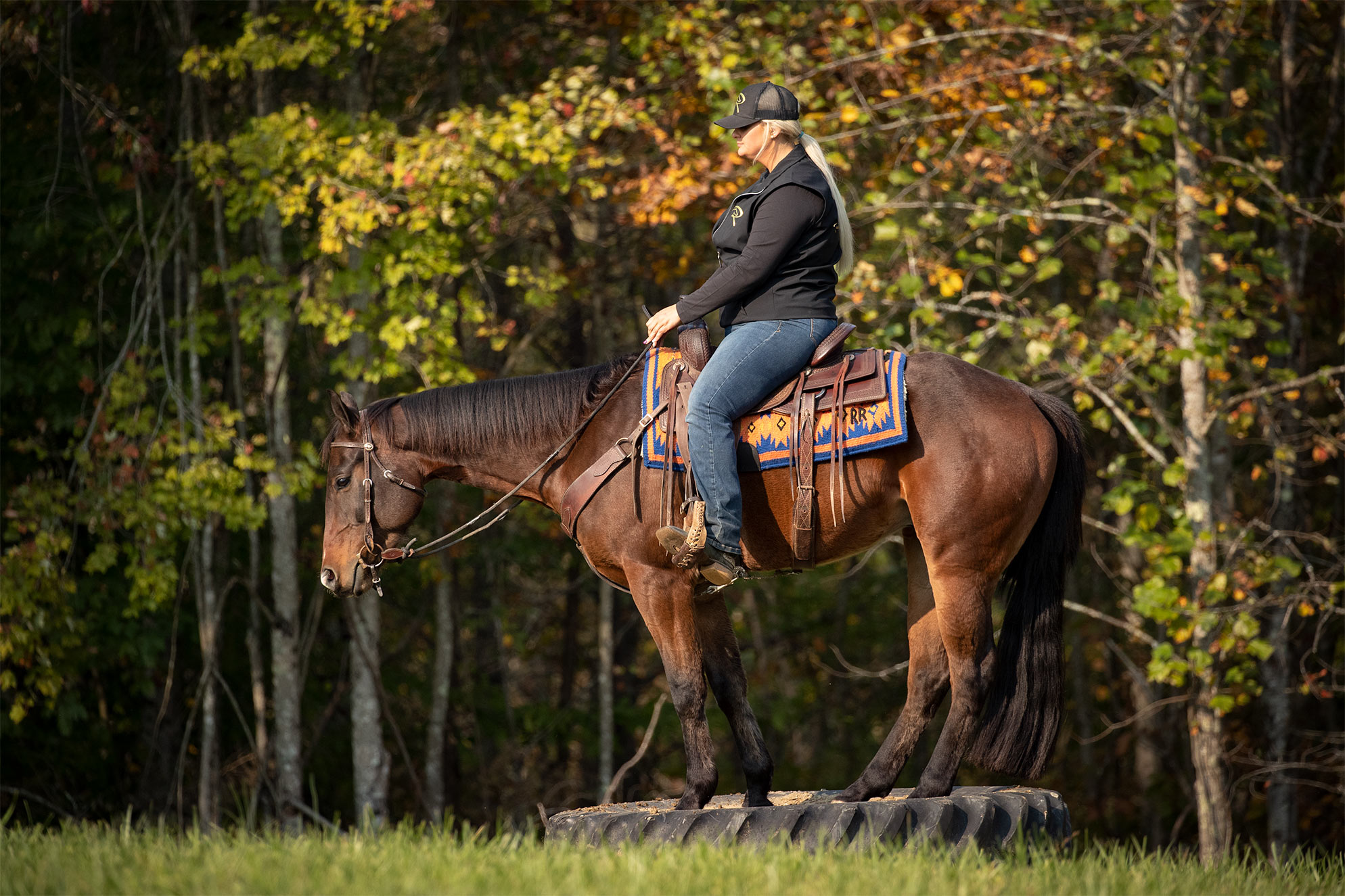 024-Ace-Luxury-Trail-Horse-For-Sale