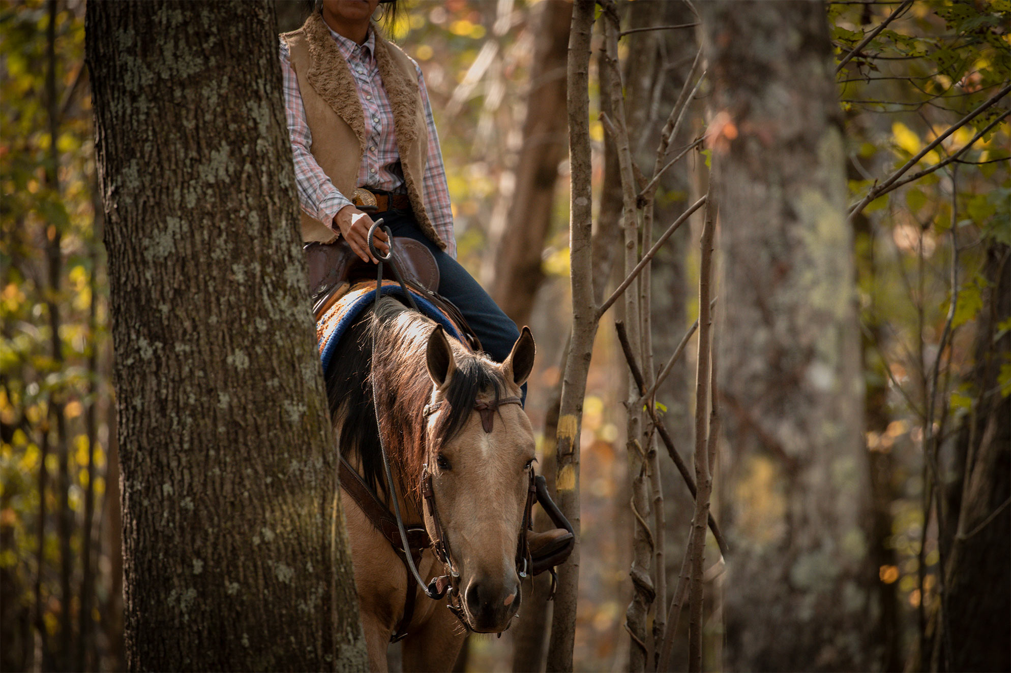 027-Dodge-Luxury-Trail-Horse-For-Sale