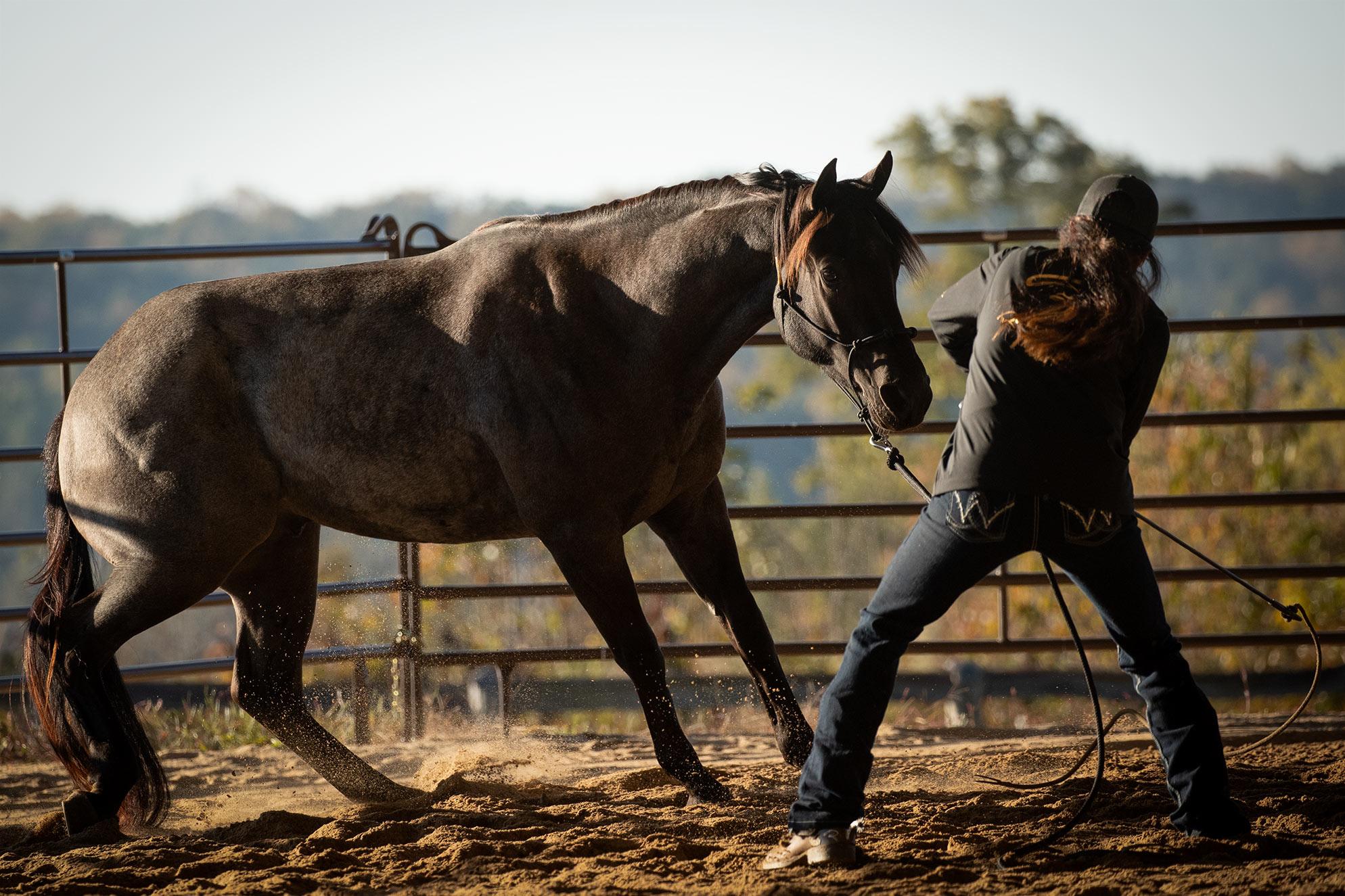 027-Gunsmoke-Luxury-Trail-Horse-For-Sale