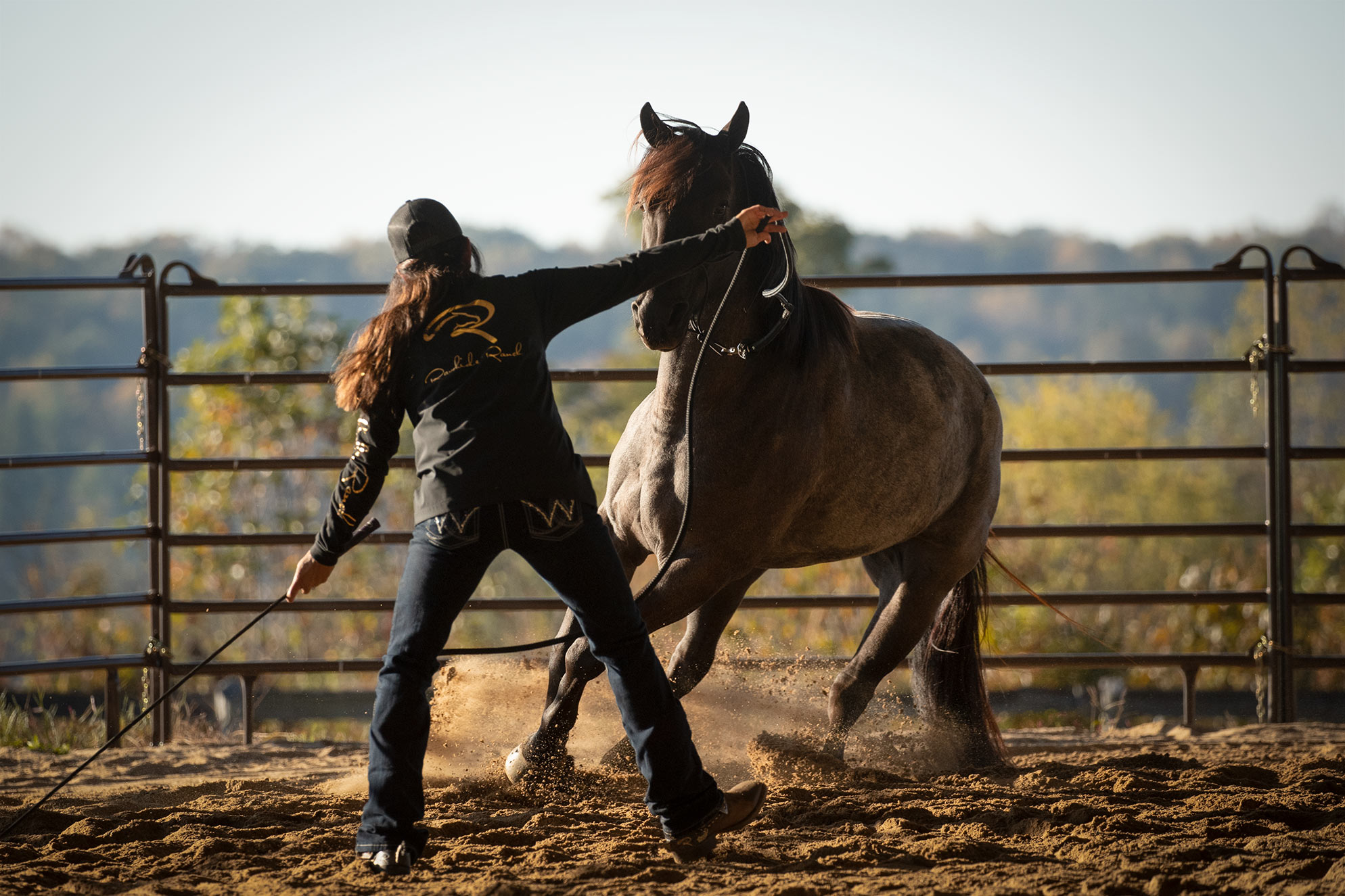 028-Gunsmoke-Luxury-Trail-Horse-For-Sale